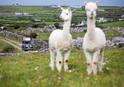 picnic tours on burren mountains clare